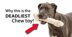How can one of the most popular chew sticks on the planet be so dangerous for your pets, you ask? I mean, most dogs chew on rawhide for hours on end, and not only does it keep them busy, but they seem to last forever. Well if you understood what it took to make this... Continue Reading