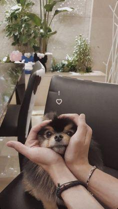 Foto Bts, Bts Photo, Bts Dogs, Park Bogum, V Bts Wallpaper, Bts Playlist, Bts Aesthetic Pictures, Bts Korea, Billboard Music Awards