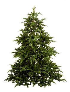 Abies Nordmann 155 cm Vianočný stromček