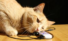 Can Feline Sound Therapy Help Cat Behavior and Health? (Giveaway!) | Care2 Healthy Living