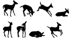 fawn silhouettes, stock images