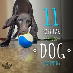 Top Indoor Activities to Do with Your Dog