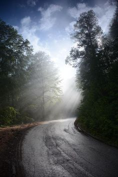 Sun rays after rain on Goch mountain in Serbia by Milan Mitrovic