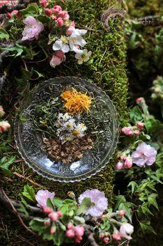 Zen, Plants, Photos, Home Decor, Diet, Pictures, Decoration Home, Room Decor, Plant