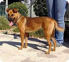 Pictures of Doodle a Shepherd (Unknown Type) Mix for adoption in Lathrop, CA who needs a loving home.