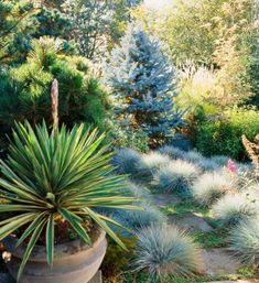 Ornamental grasses: Cover ground. Low-growing or midsize grasses are top-notch groundcovers. They smother weeds while providing interesting texture. Mounding grasses make good groundcovers because of their dense habit.