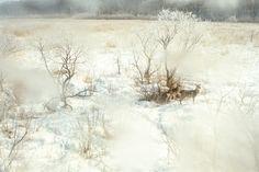 Takeshi Suga: Winter Wonderland