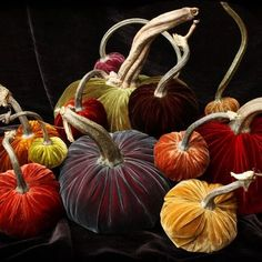 Come and check out our Fall Preview of the Hot Skwash velvet pumpkins. They are made with REAL pumpkin stems and we sell out of them every year so come start your collection soon!!