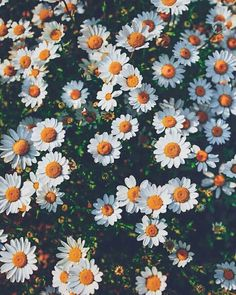 Image uploaded by Khaoula La Charmante. Find images and videos about flowers, wallpaper and background on We Heart It - the app to get lost in what you love.