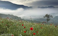 Mountain Grassland such as those in the Ethiopian highlands, on the Tibetan Plateau and up in the Andes, include the alpine tundra above the treeline as well as grasslands below it. (BBC Nature videos, news and facts)