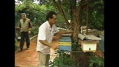 DR.DAVI SAID AIDAR GLOBO RURAL - Multiplicação de Colmeias de Abelhas Ma...