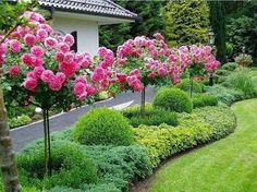 48 Fresh And Beautiful Front Yard Landscaping Ideas - Alles für den Garten Plants, Front Landscaping, Cottage Garden, Acreage Landscaping, Small Gardens, Beautiful Yards, Outdoor Gardens, Garden Planning, Beautiful Gardens