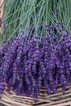 Lavender by kevin.coleman, via Flickr