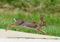 0613_053_rabbit_run2.jpg (800×564)