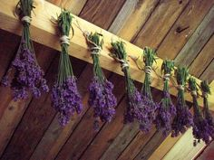 Drying lavender.