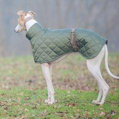 pattern for life size greyhound dog - Buscar con Google