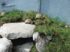 Tortois hideout...