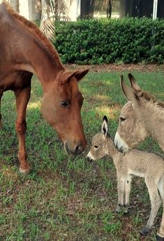 Baby animals have the power to melt all hearts, even those made of steel. But while everyone enjoys seeing a palm-sized fox or deer, people rarely take their