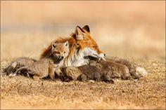 """Gabi Marklein mit dem Foto """"Fuchsfamilie"""""""