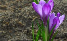 цветы, земля