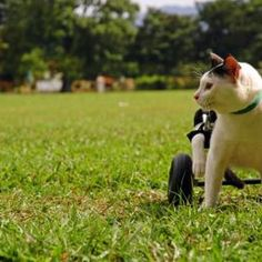 Give your disabled cat new life with a DIY wheelchair.