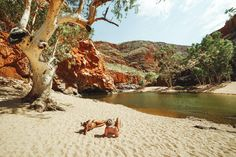 I went on a adventure into the Australian Outback. Not only did I survive but I cam back with some awesome NT photography and outback landscape shots. Places To Travel, Places To See, Red Centre, Adventurous Things To Do, Palm Resort, Alice Springs, Air Balloon Rides, Swimming Holes, Get Outdoors