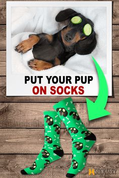 5adb54436be 12 Inspiring Dog Socks images