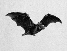 Like the positioning of this bat in particular. Good reference for what wings look like in flight.