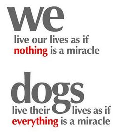 DOGS ARE MIRACLES