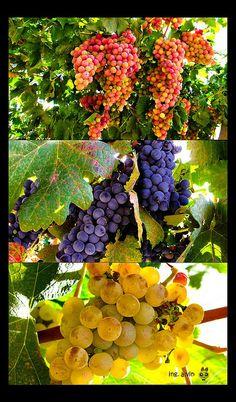 Tierra del sol y del buen vino by Ing. Alvin, via Flickr