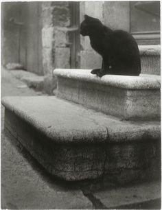 Brassaï: Le Chat Noir, ca. 1945. Source:Centre Georges Pompidou,viaRéunion des Musées Nationaux.
