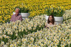 HILLEGOM - Boeren enin de bloembollensector gaan bewust om met hun teelt en hun omgeving. Bedrijven kunnen dat nu ook laten zien met de slogan 'Bewuste boeren kleuren de wereld'. Er zijn borden ontwikkeld die bedrijven kunnen plaatsen in hun bollenveld of bij de oprit. Er is een ontwerp met tulpen en een ontwerp met