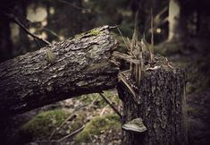 3 Steps to Tree Removal Before Starting a Landscaping Project