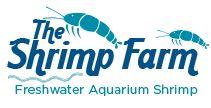 Ideal Freshwater Aquarium Plants For Your Shrimp Planted Aquarium, Aquarium Fish, Aquarium Ideas, Axolotl Tank, Freshwater Aquarium Shrimp, Red Cherry Shrimp, Shrimp Farming, Ant Colony, Shrimp Tank
