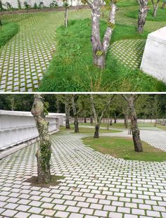 Looks like you can keep an element of green through the paving - at least in low traffic areas.