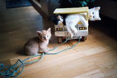 Crazy little furballs by Dj Munnskol, via Flickr