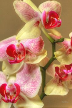 Orchid Highlights by Deborah  Crew-Johnson on 500px