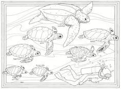 Sea Turtle Coloring Coloring worksheets Sea turtles and Turtle