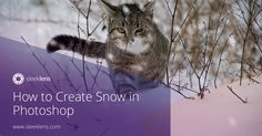 Check out how you can create the effect of snow in your photos with Photoshop.