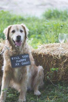 HowHeAsked 20 Cute Marriage Proposal Ideas With Dogs Dog Wedding, Wedding Guest Book, Dream Wedding, Wedding Ideas, Wedding Poses, Wedding Pictures, Wedding Details, Wedding Stuff, Wedding Planning