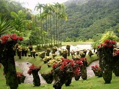 Martinique, Jardin de Balata