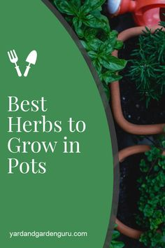 Herbs are a wonderful addition to your cooking and also very healthy for you. how to grow herbs in pots so you can grow them anywhere