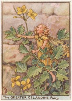 FLOWER FAIRIES/BOTANICALS: The Greater Celandine Fairy; This is an original vintage Cicely Mary Barker Flower fairies colour print. It is not a modern reproduction, c1948; approximate size 11.0 x 7.5cm, 4.25 x 3 inches