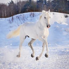 Winter Hoof-Care Tips For Your Clients Snow Photography, Equine Photography, Winter Horse, Winter Is Here, Horse Love, Beautiful Horses, Pretty Horses, Beautiful Places, Horseback Riding