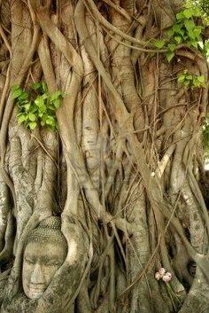 Buddha's head in Bodhi Tree(Ayutthaya)