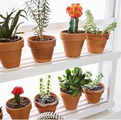 Cactus garden?