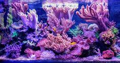Aquarium Design, Reef Aquarium, Saltwater Aquarium, Cold Hard Cash, World Wide Corals, Reef Tanks, All The Way Down, See You, Livestock