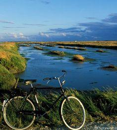 Le vélo...meilleur moyen de locomotion pour circuler sur l'île de Ré - En famille, en couple, entre amis...venez passer des vacances inoubliables sur l'île de Ré | Charente-Maritime Tourisme #charentemaritime | #vélo | #IledeRé