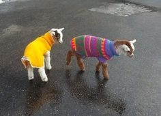 iconicgloryy:  My aunts neighbor has baby goats and he put the cutest little sweaters on them ever and all I want to do is cuddle with them ...