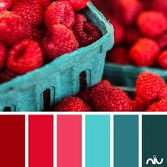Image result for raspberry color palette